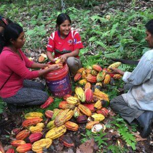 Társadalmi felelősségvállalás - adakozás, adomány, Direct Trade, környezetvédelem