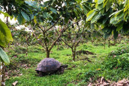 To'ak Galapagos 2018 75%-os étcsokoládé